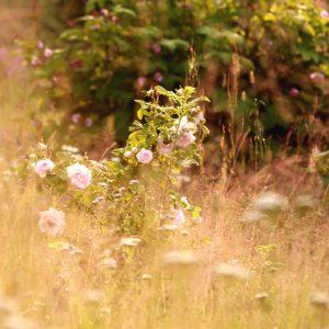 Regnvåt trädgård – A5-kort