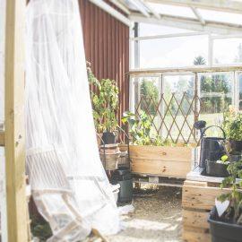 Trädgårdsuppdatering – vad annars?