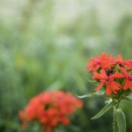 Prioritering: stanna och dofta på blommorna